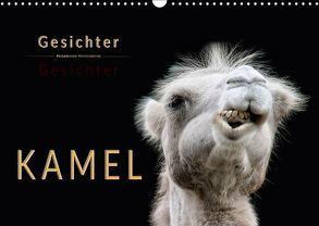 Kamel Gesichter (Wandkalender 2018 DIN A3 quer) von Roder,  Peter