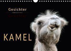 Kamel Gesichter (Wandkalender 2018 DIN A4 quer) von Roder,  Peter