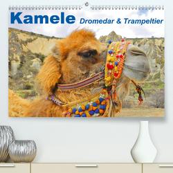 Kamele • Dromedar & Trampeltier (Premium, hochwertiger DIN A2 Wandkalender 2021, Kunstdruck in Hochglanz) von Stanzer,  Elisabeth