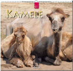 Kamele von Redaktion Verlagshaus Würzburg,  Bildagentur