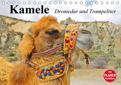 Kamele. Dromedar und Trampeltier (Tischkalender 2021 DIN A5 quer) von Stanzer,  Elisabeth