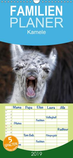 Kamele – Familienplaner hoch (Wandkalender 2019 , 21 cm x 45 cm, hoch) von Berg,  Martina