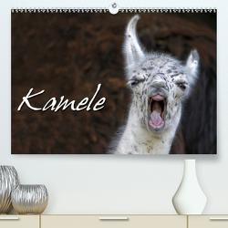 Kamele (Premium, hochwertiger DIN A2 Wandkalender 2020, Kunstdruck in Hochglanz) von Berg,  Martina