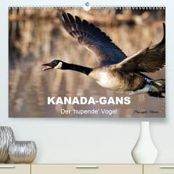 KANADA-GANS – Der 'hupende' Vogel (Premium, hochwertiger DIN A2 Wandkalender 2020, Kunstdruck in Hochglanz) von Henry,  Philippe
