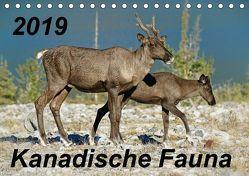 Kanadische Fauna 2019 (Tischkalender 2019 DIN A5 quer) von Schug,  Stefan