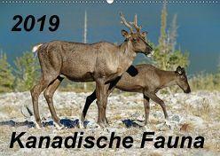 Kanadische Fauna 2019 (Wandkalender 2019 DIN A2 quer) von Schug,  Stefan
