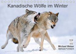 Kanadische Wölfe im Winter (Tischkalender 2018 DIN A5 quer) von Weber,  Michael