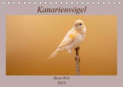Kanarienvögel – Bunte Welt (Tischkalender 2019 DIN A5 quer) von Akrema-Photography