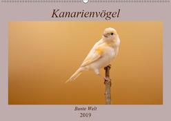 Kanarienvögel – Bunte Welt (Wandkalender 2019 DIN A2 quer) von Akrema-Photography