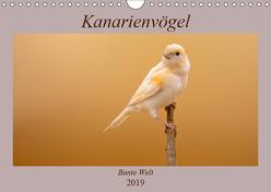 Kanarienvögel – Bunte Welt (Wandkalender 2019 DIN A4 quer) von Akrema-Photography
