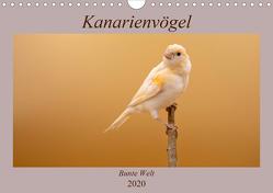 Kanarienvögel – Bunte Welt (Wandkalender 2020 DIN A4 quer) von Akrema-Photography