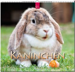 Kaninchen von Redaktion Verlagshaus Würzburg,  Bildagentur