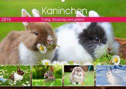 Kaninchen. Putzig, flauschig und geliebt (Wandkalender 2019 DIN A2 quer) von Hurley,  Rose