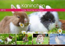 Kaninchen. Putzig, flauschig und geliebt (Wandkalender 2019 DIN A3 quer) von Hurley,  Rose