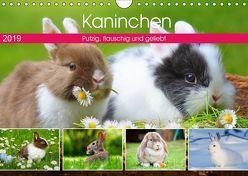 Kaninchen. Putzig, flauschig und geliebt (Wandkalender 2019 DIN A4 quer) von Hurley,  Rose
