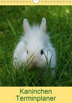 Kaninchen Terminplaner (Wandkalender 2019 DIN A4 hoch) von kattobello