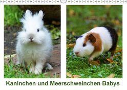 Kaninchen und Meerschweinchen Babys (Wandkalender 2018 DIN A3 quer) von Kattobello,  k.A.