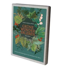 Grüne Wunder erleben – 36 Karten mit Anleitungen für vier Auszeiten in der Natur von Apelt,  Anne-Maria, Weigel,  Anne