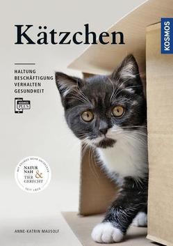 Kätzchen von Mausolf,  Anne-Katrin