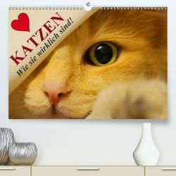 Katzen • Wie sie wirklich sind! (Premium, hochwertiger DIN A2 Wandkalender 2020, Kunstdruck in Hochglanz) von Stanzer,  Elisabeth