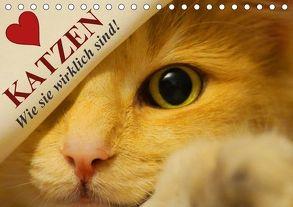Katzen • Wie sie wirklich sind! (Tischkalender 2018 DIN A5 quer) von Stanzer,  Elisabeth