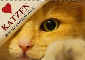 Katzen • Wie sie wirklich sind! (Wandkalender 2018 DIN A2 quer) von Stanzer,  Elisabeth