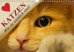 Katzen • Wie sie wirklich sind! (Wandkalender 2019 DIN A4 quer) von Stanzer,  Elisabeth