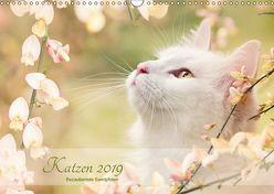 Katzen 2019 Bezaubernde Samtpfoten (Wandkalender 2019 DIN A3 quer) von Pohle,  Janice