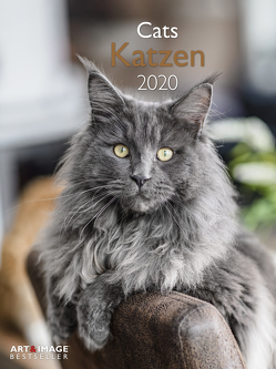 Katzen 2020 A&I