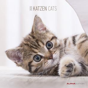 Katzen 2020 – Cats – Wandkalender – Broschürenkalender (30 x 60 geöffnet) – Tierkalender – Wandplaner von ALPHA EDITION