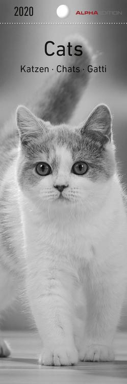 Katzen 2020 – Lesezeichenkalender (5,5 x 16,5) – Cats – Tierkalender – Gadget – Lesehilfe – Geschenkidee von ALPHA EDITION