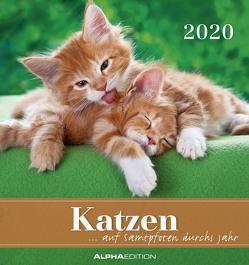 Katzen 2020 – Postkartenkalender (16 x 17) – Cats – zum aufstellen oder aufhängen – Geschenkidee – Tierkalender – Gadget von ALPHA EDITION