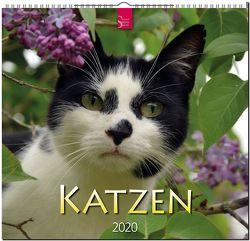 Katzen von Redaktion Verlagshaus Würzburg,  Bildagentur