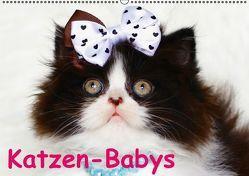 Katzen-Babys (Wandkalender immerwährend DIN A2 quer) von Stanzer,  Elisabeth
