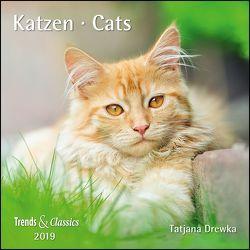 Katzen Cats 2019 – Broschürenkalender – Wandkalender – mit herausnehmbarem Poster – Format 30 x 30 cm von Drewka,  Tatjana, DUMONT Kalenderverlag