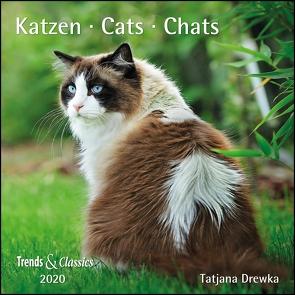 Katzen Cats 2020 – Broschürenkalender – Wandkalender – mit herausnehmbarem Poster – Format 30 x 30 cm von Drewka,  Tatjana, DUMONT Kalenderverlag