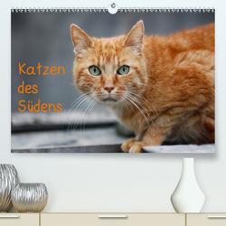 Katzen des Südens (Premium, hochwertiger DIN A2 Wandkalender 2020, Kunstdruck in Hochglanz) von Möckel / Lucy L!u,  Claudia