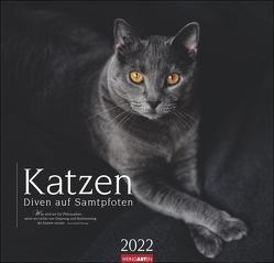 Katzen – Diven auf Samtpfoten Kalender 2022 von Weingarten