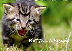 Katzen & Hunde (Wandkalender 2019 DIN A2 quer) von Lehmann,  Heiko