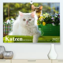 Katzen im Grünen (Premium, hochwertiger DIN A2 Wandkalender 2021, Kunstdruck in Hochglanz) von Dzierzawa,  Judith