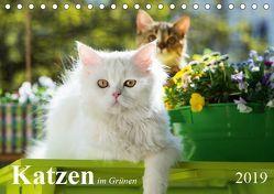 Katzen im Grünen (Tischkalender 2019 DIN A5 quer) von Dzierzawa,  Judith