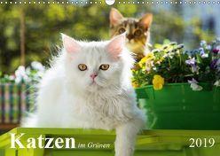 Katzen im Grünen (Wandkalender 2019 DIN A3 quer) von Dzierzawa,  Judith
