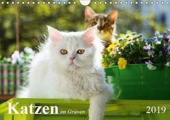 Katzen im Grünen (Wandkalender 2019 DIN A4 quer) von Dzierzawa,  Judith