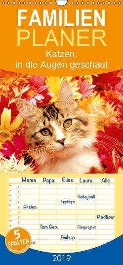 Katzen: in die Augen geschaut – Familienplaner hoch (Wandkalender 2019 , 21 cm x 45 cm, hoch) von CALVENDO