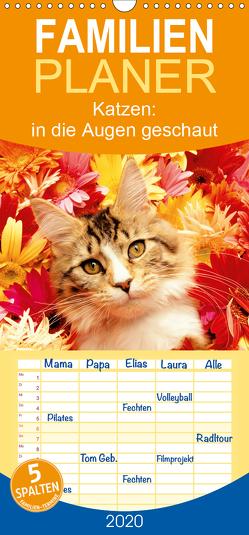 Katzen: in die Augen geschaut – Familienplaner hoch (Wandkalender 2020 , 21 cm x 45 cm, hoch) von CALVENDO