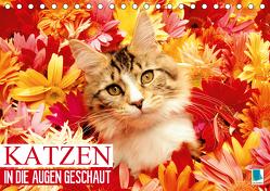 Katzen: in die Augen geschaut (Tischkalender 2020 DIN A5 quer) von CALVENDO