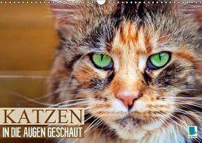 Katzen: in die Augen geschaut (Wandkalender 2018 DIN A3 quer) von CALVENDO