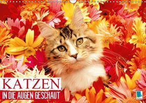 Katzen: in die Augen geschaut (Wandkalender 2019 DIN A3 quer) von CALVENDO,  k.A.