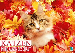 Katzen: in die Augen geschaut (Wandkalender 2020 DIN A3 quer) von CALVENDO