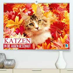 Katzen: in die Augen geschaut (Premium, hochwertiger DIN A2 Wandkalender 2020, Kunstdruck in Hochglanz) von CALVENDO